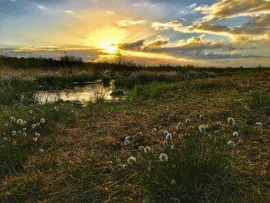 Die ersten Sonnenstrahlen im Hiller Moor.