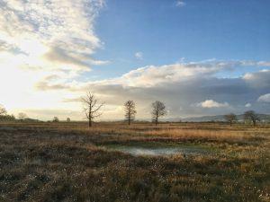 Ein Teich im Hiller Moor.