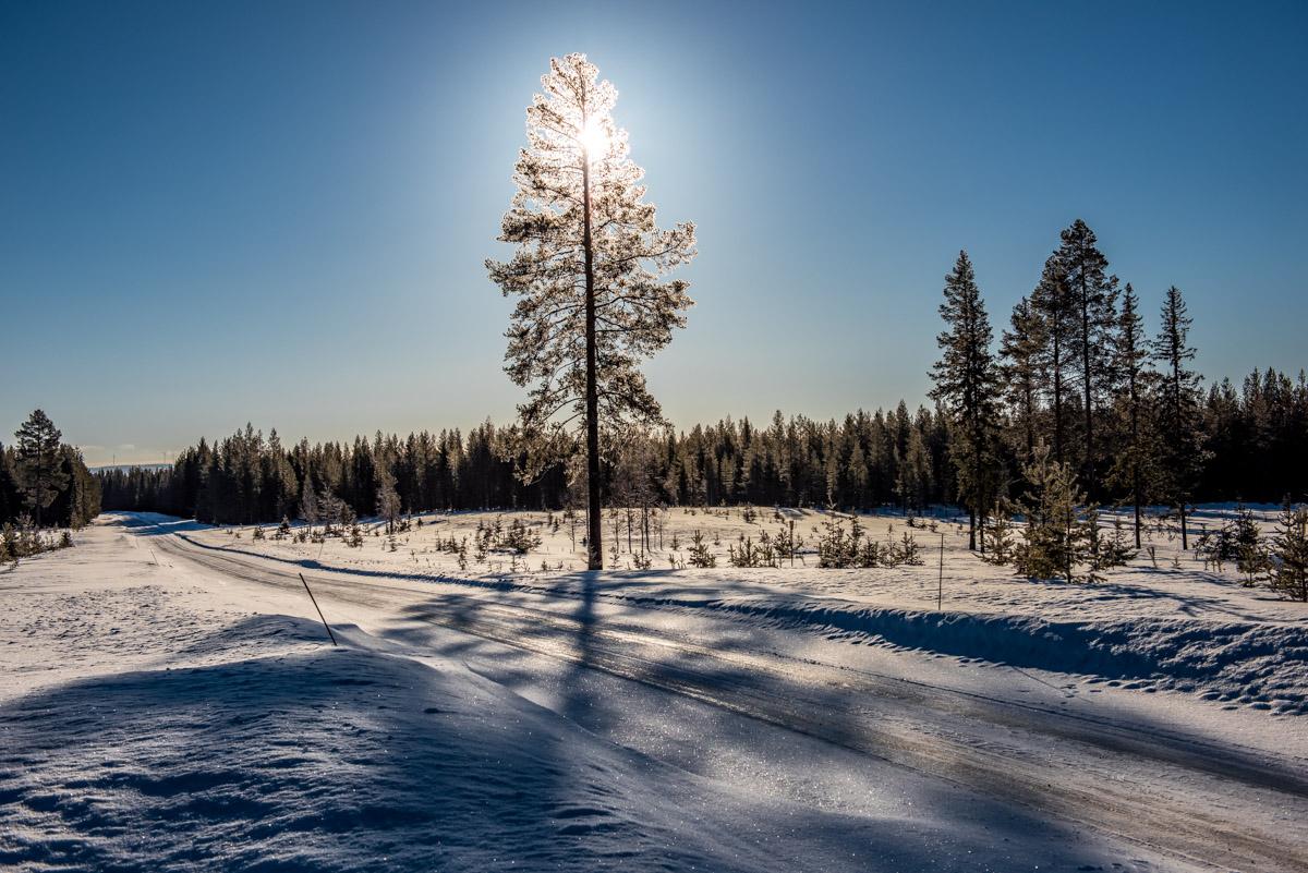 Winterlicher Sonnenschein in Schweden